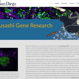 Musashi Gene Research